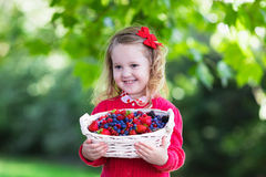 Little girl with fresh berries in a basket. Child picking berries on a farm. Little girl eating strawberry, raspberry, blueberry, blackberry, red and black Royalty Free Stock Image