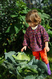 Little girl in the garden with cabbage Stock Photography