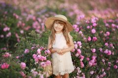 A little girl in the garden of a tea rose royalty free stock photography