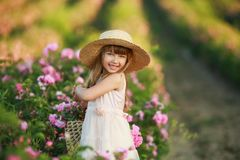A little girl in the garden of a tea rose stock photography