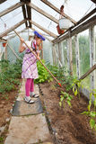 Little girl gardening in greenhouse Stock Photos