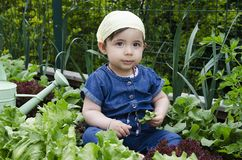 Little girl in gardening outfit sitting in a Raised bed. With fresh seasonal vegetable and watering can Stock Photography