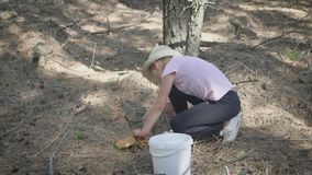 Little girl gather mushrooms in the forest on a sunny day. Mushrooms picking, season for mushrooms. Lovely girl with stock video footage