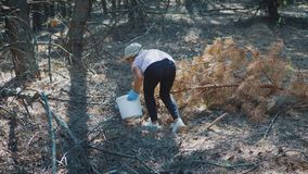 Little girl gather mushrooms in the forest on a sunny day. Mushrooms picking, season for mushrooms. Lovely girl with stock video
