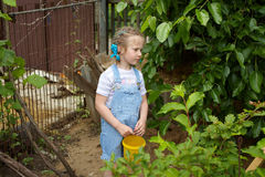 Little girl gathering harvest mulberry berries Stock Photography