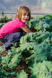 Little girl gathering kale Stock Photos