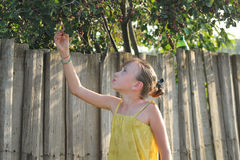 Little girl gathers berries - is taking Saskatoon near wooden fence Royalty Free Stock Images