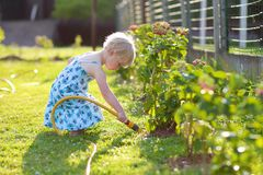 Little girl giving water to flowers in the garden Stock Photos