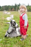 Little girl and goat stock photo