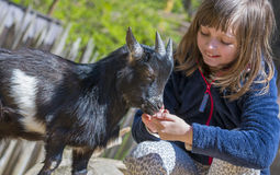 Little girl with goat Stock Photography