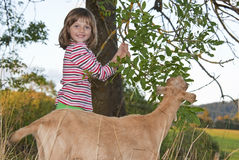Little girl with goat on a pasture Royalty Free Stock Images