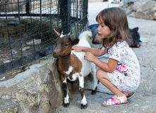 A little girl and a goat. stock photography