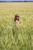 The little girl goes on a grain field Stock Image