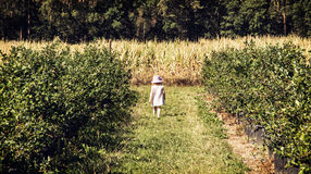 Little girl is going through the corridor in the orchard, outdoo Royalty Free Stock Image