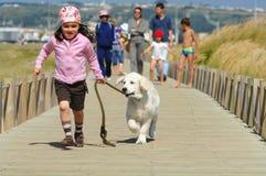 Little girl with a Golden retriever royalty free stock photos