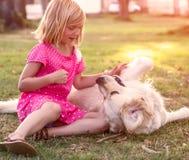 Little girl with golden retriever dog. Young girl hugging golden retriever dog in the park Stock Photos