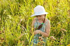 Little girl among the grass Stock Photos