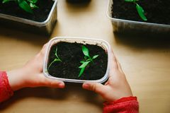 Little girl growing plants for the garden. In spring royalty free stock images