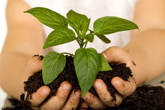 Little girl hands holding new plant Royalty Free Stock Photography