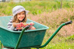 Little girl with hat who picking strawberries. Little girl with a white hat who picking strawberries Royalty Free Stock Photography