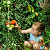 Little girl helping her mother with tomato in the garden Stock Photo