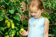 Little girl helping her mother with tomato in the garden Stock Photos