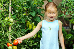 Little girl helping her mother with tomato in the garden Royalty Free Stock Images
