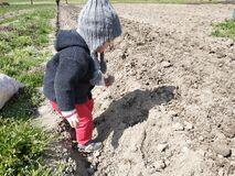 Little girl helping to plant potatoes in the village, mom with baby on the field