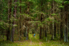 Little girl and her big dog taking a walk in a dark forest Stock Images