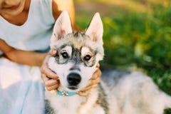 Little Girl And Her Dog Husky In Summer Park Stock Image