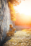 Little girl with her dog stock photography