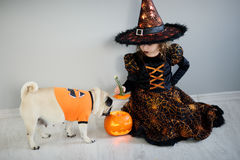 Little girl and her friend - pug are dressed in suits for Halloween. Girl in an image of sorcerer sits on a floor. On a doggie have put on an orange sweater stock photography