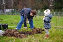 Little girl and her grandmother planting a tree Stock Photography