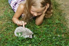 Little girl with her pet African pygmy hedgehog. Beautiful little blondngirl with her pet African pygmy hedgehog. Friendship stock photography