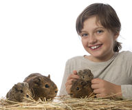Little girl and her pet a guinea pigs. White background Stock Photo