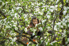 Little girl hid in the branches of a blossoming Apple tree. Happy. Stock Image