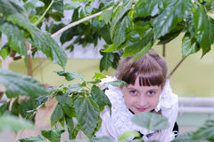 The little girl hides behind the sheet. Little girl peeks out from behind the leaves Stock Photography