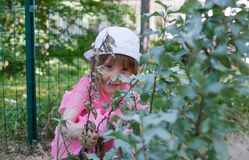 Little girl is hiding behind the bushes branches in summer stock photography
