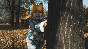 Little girl hiding behind a tree in the autumn forest.  stock video footage
