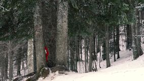 A little girl hiding behind the tree in the snow forest, 4K. A little girl hiding behind the tree in the snow forest stock video footage
