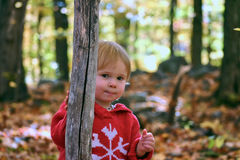 Hide and seek in the woods Royalty Free Stock Photos