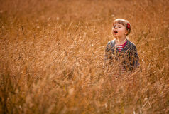 Little girl in the high grass Stock Image