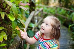 Child looking at flower in jungle. Stock Photo