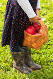 Little Girl Hold Basket Of Birch With Ripe Apples Outdoor. Royalty Free Stock Photo