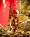 Little girl holding autumn leaves in the beauty park Royalty Free Stock Photography