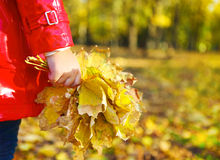 Little girl holding autumn leaves in the beauty park Royalty Free Stock Photos