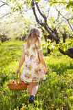 Little girl holding a basket with red apples Royalty Free Stock Images