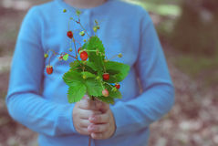 Little girl holding bouquet of wild strawberries Royalty Free Stock Photos