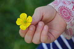 Little girl holding a buttercup in her hand Stock Images