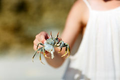 Little girl holding a crab Royalty Free Stock Image